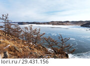 Купить «Baikal Lake in December. Thin blue ice in Kurkut Bay and the larches trees on the rocky shore in a cold afternoon», фото № 29431156, снято 2 декабря 2012 г. (c) Виктория Катьянова / Фотобанк Лори