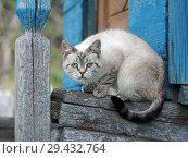 Купить «Portrait of a strange cat. The cat is a purebred. Have animal disease eye», фото № 29432764, снято 16 ноября 2018 г. (c) Ирина Козорог / Фотобанк Лори