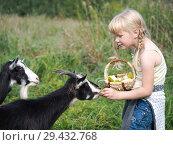 Купить «Funny cute baby feeding a goat. Girl treats animal», фото № 29432768, снято 16 ноября 2018 г. (c) Ирина Козорог / Фотобанк Лори