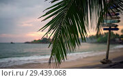 Купить «Swinging palm tree on tropical background of seashore and sunset sky», видеоролик № 29439068, снято 9 ноября 2018 г. (c) Andriy Bezuglov / Фотобанк Лори