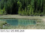 Купить «Голубое гейзерное озеро, около села Акташ, Улаганский район, Горный Алтай, Сибирь, Россия», фото № 29440264, снято 7 июня 2018 г. (c) Free Wind / Фотобанк Лори