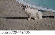 Купить «white Adult cat is by the pool», видеоролик № 29442136, снято 3 ноября 2018 г. (c) Володина Ольга / Фотобанк Лори