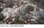 Купить «Dry grass on stony ground on the island of Cyprus», видеоролик № 29456092, снято 20 ноября 2018 г. (c) Володина Ольга / Фотобанк Лори