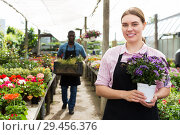 Купить «Florist woman gardening in glasshouse», фото № 29456376, снято 19 апреля 2018 г. (c) Яков Филимонов / Фотобанк Лори