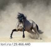 Купить «Буланая испанская лошадь играет в пыли», фото № 29466440, снято 16 мая 2017 г. (c) Абрамова Ксения / Фотобанк Лори