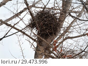 Купить «Осеннее гнездо на тополе», эксклюзивное фото № 29473996, снято 13 ноября 2018 г. (c) Анатолий Матвейчук / Фотобанк Лори