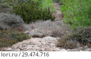 Купить «The nature of island of Cyprus - pine and stone land», видеоролик № 29474716, снято 24 ноября 2018 г. (c) Володина Ольга / Фотобанк Лори