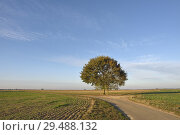 Купить «Deux chenes isoles sur le bord d'une route de campagne, departement d'Eure-et-Loir, region Centre-Val de Loire, France, Europe/two oak trees on the edge...», фото № 29488132, снято 20 октября 2018 г. (c) age Fotostock / Фотобанк Лори