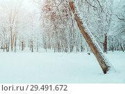 Купить «Winter Christmas landscape - frosty trees in winter forest in the morning. Winter landscape with winter trees», фото № 29491672, снято 11 декабря 2017 г. (c) Зезелина Марина / Фотобанк Лори