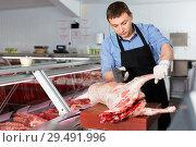 Купить «Skillful butcher processing carcase of young lamb for sale at butchery», фото № 29491996, снято 20 апреля 2018 г. (c) Яков Филимонов / Фотобанк Лори