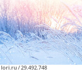 Купить «Winter landscape with snow-covered reeds in the sun», фото № 29492748, снято 26 ноября 2018 г. (c) Икан Леонид / Фотобанк Лори