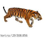 Купить «Great Siberian tiger (P. t. altaica), also known as Amur tiger», фото № 29508856, снято 30 ноября 2018 г. (c) Валерия Попова / Фотобанк Лори