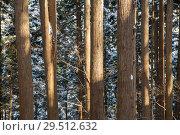 Купить «winter forest in japan», фото № 29512632, снято 8 февраля 2018 г. (c) Syda Productions / Фотобанк Лори