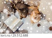 Купить «two cats lying on sofa with book at home», фото № 29512688, снято 15 ноября 2017 г. (c) Syda Productions / Фотобанк Лори
