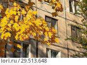 Купить «Ветка клена с желтыми листьями на фоне жилого дома», эксклюзивное фото № 29513648, снято 14 октября 2018 г. (c) Александр Щепин / Фотобанк Лори