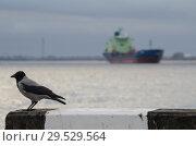 Купить «Черная ворона на фоне корабля», фото № 29529564, снято 12 октября 2018 г. (c) Яковлев Сергей / Фотобанк Лори