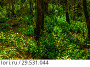 Купить «Background - undergrowth of subtropical forest, yew-boxwood grove», фото № 29531044, снято 25 сентября 2017 г. (c) Евгений Харитонов / Фотобанк Лори