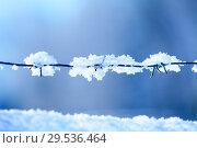 Купить «Снежинки на колючей проволоке на синем фоне», фото № 29536464, снято 30 декабря 2014 г. (c) Кекяляйнен Андрей / Фотобанк Лори