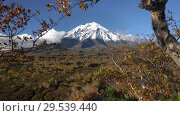 Купить «Beautiful volcanic landscape - view of rocky cone volcano, yellow-orange forest», видеоролик № 29539440, снято 29 сентября 2018 г. (c) А. А. Пирагис / Фотобанк Лори