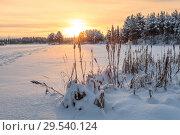 Купить «Красивый закат на заснеженном озере, засохший тростник, следы в сторону леса, Карелия», фото № 29540124, снято 24 декабря 2014 г. (c) Кекяляйнен Андрей / Фотобанк Лори