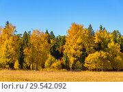 Купить «Autumn trees leaves multicolored», фото № 29542092, снято 12 октября 2018 г. (c) Дмитрий Брусков / Фотобанк Лори