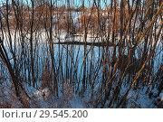Купить «Заречье ивовое», эксклюзивное фото № 29545200, снято 25 ноября 2018 г. (c) Анатолий Матвейчук / Фотобанк Лори