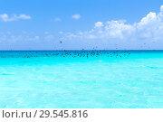 Купить «birds flying over ocean in french polynesia», фото № 29545816, снято 22 февраля 2018 г. (c) Syda Productions / Фотобанк Лори