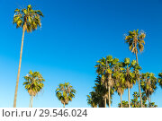 Купить «palm trees over sky at venice beach, california», фото № 29546024, снято 26 февраля 2018 г. (c) Syda Productions / Фотобанк Лори