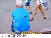 Бабочка (2018 год). Редакционное фото, фотограф Екатерина Разгуляева / Фотобанк Лори