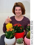 Купить «The Woman watering potted flowers Kalanchoe indoors», фото № 29560932, снято 20 ноября 2017 г. (c) Володина Ольга / Фотобанк Лори