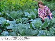 Купить «Woman sitting on cabbage field in summer», фото № 29560964, снято 17 июля 2017 г. (c) Володина Ольга / Фотобанк Лори