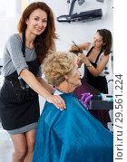 Купить «Stylist preparing customer for hair styling», фото № 29561224, снято 26 июня 2018 г. (c) Яков Филимонов / Фотобанк Лори