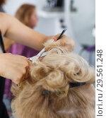 Купить «Hands of hairdresser making hairstyle for female», фото № 29561248, снято 26 июня 2018 г. (c) Яков Филимонов / Фотобанк Лори