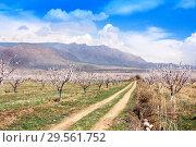 Купить «Apricot farm during sping season against Vayk mountain range, Vayots Dzor Province», фото № 29561752, снято 16 марта 2018 г. (c) Papoyan Irina / Фотобанк Лори