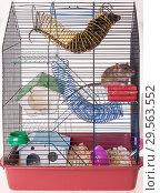 Купить «Cage for domestic rats», фото № 29563552, снято 14 февраля 2010 г. (c) Argument / Фотобанк Лори