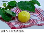 Купить «Наливное яблочко», фото № 29565056, снято 14 сентября 2018 г. (c) Инга Прасолова / Фотобанк Лори