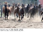 Купить «Stuet Graditz, Horses gallop on a sand paddock», фото № 29569256, снято 15 апреля 2018 г. (c) Caro Photoagency / Фотобанк Лори