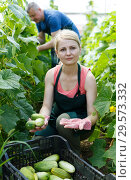 Купить «Woman with husband gathering in crops of cucumbers», фото № 29573332, снято 5 июля 2018 г. (c) Яков Филимонов / Фотобанк Лори