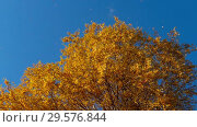 Купить «Autumn trees with yellowing leaves against the sky», видеоролик № 29576844, снято 29 сентября 2018 г. (c) Игорь Жоров / Фотобанк Лори