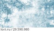 Купить «Frozen pine tree branches», фото № 29590980, снято 16 ноября 2018 г. (c) Икан Леонид / Фотобанк Лори