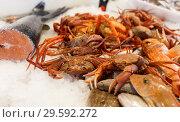 Купить «Display with crustaceans in shop», фото № 29592272, снято 17 октября 2018 г. (c) Яков Филимонов / Фотобанк Лори