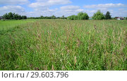 Купить «Beautiful meadow grass in Russia. Rural houses on horizon», видеоролик № 29603796, снято 25 июня 2018 г. (c) Володина Ольга / Фотобанк Лори
