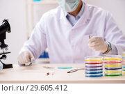 Купить «The young chemist working in the lab», фото № 29605412, снято 21 августа 2018 г. (c) Elnur / Фотобанк Лори