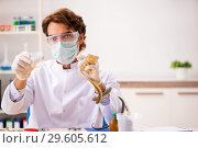 Купить «The male scientist extracting poison from snake for drug synthesis», фото № 29605612, снято 24 сентября 2018 г. (c) Elnur / Фотобанк Лори