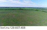 Купить «View of the field with crops in June in Russia», видеоролик № 29607408, снято 20 марта 2019 г. (c) Володина Ольга / Фотобанк Лори