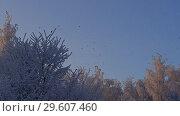 Купить «Tree tops covered with frost low angle shot», видеоролик № 29607460, снято 22 декабря 2018 г. (c) Гурьянов Андрей / Фотобанк Лори