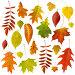 Купить «Big collection of beautiful dry autumn leaves isolated on white background», фото № 29619532, снято 20 апреля 2019 г. (c) Сергей Чайко / Фотобанк Лори
