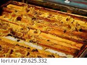 Купить «Bees are sitting on the comb in the hive», фото № 29625332, снято 7 августа 2017 г. (c) Володина Ольга / Фотобанк Лори