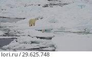 Купить «Polar Bear with two cubs», видеоролик № 29625748, снято 14 июля 2018 г. (c) Vladimir / Фотобанк Лори