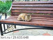 Gray cat sleeping on wooden bench. Стоковое фото, фотограф FotograFF / Фотобанк Лори